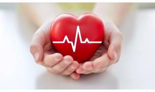 Сердце – мотор нашего организма