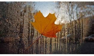 Осенняя депрессия - безопасное лечение травами.